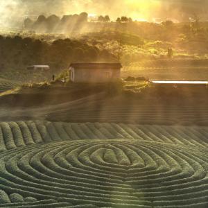 Spirale in campagna per ritorno alle origini